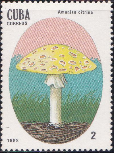 3001 Amanita Citrina [Poisonous Mushrooms] Cuba Stamp 1988