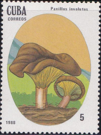 3003 Paxillus Involutus [Poisonous Mushrooms] Cuba Stamp 1988