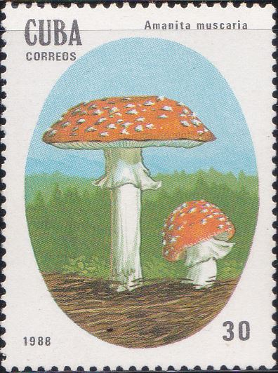 3005 Amanita Muscaria [Poisonous Mushrooms] Cuba Stamp 1988