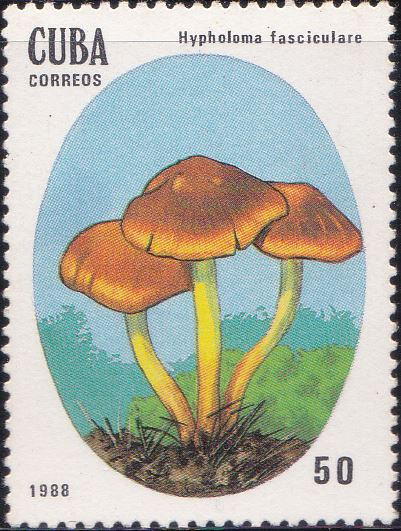 3006 Hypholoma Fasciculare [Poisonous Mushrooms] Cuba Stamp 1988