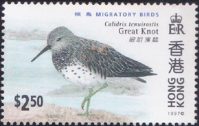 785 Great Knot [Migratory Birds] Hong Kong Stamp 1997