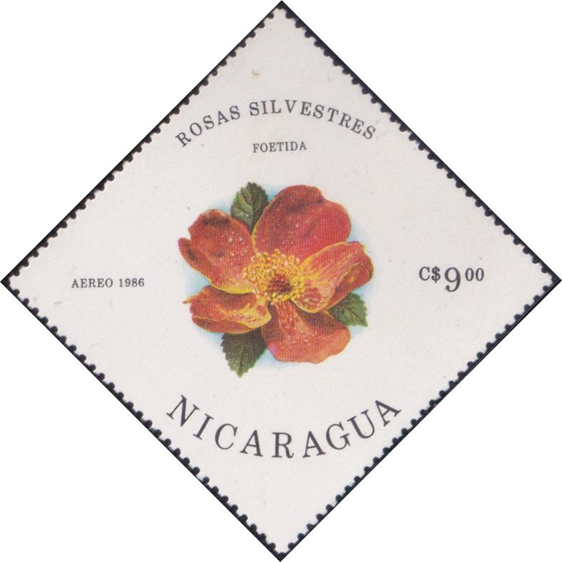 1498 Foetida (Rosas Silvestres) [Nicaragua Diamond Airmail Stamp 1986]