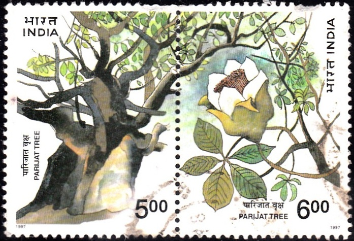 Pariyat tree (Kantur)