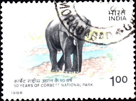 Asian elephant (Elephas maximus): Jim Corbett National Park