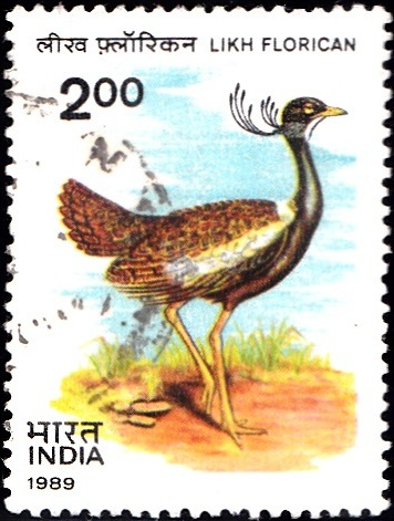 1225 Likh Florican [India Stamp 1989]
