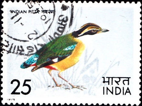 638 Indian Pitta [Indian Bird] Stamp 1975