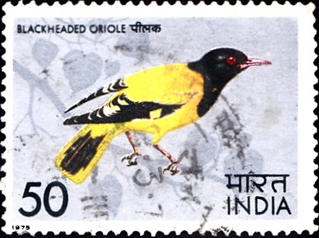 639 Headed Oriole [Indian Bird] Stamp 1975