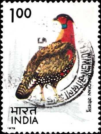 640 Western Tragopan [Indian Bird] Stamp 1975