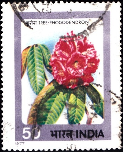 725 Tree-Rhododendron [India Stamp 1977]