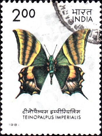 Kaiser-e-Hind (Teinopalpus imperialis)