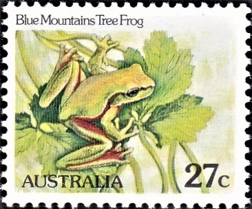 Litoria citropa : Australasian treefrogs
