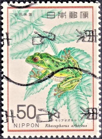 Mori aogaeru : Rhacophorus arboreus