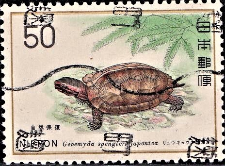 Yanbarugame Mountain Tortoise : Japanese natural monument, Okinawa