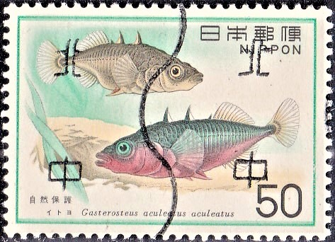 Gasterosteus aculeatus : Northern Hemisphere Water-life