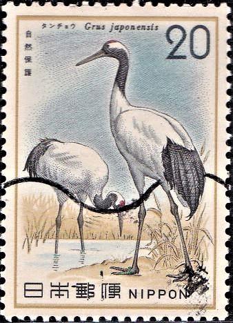 Red-crowned Crane (Manchurian crane) : Grus japonensis