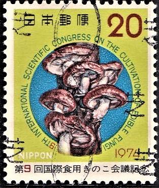 Shiitake (Lentinula edodes) : Edible Medicinal Mushroom