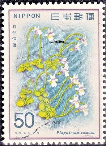 Butterwort : Carnivorous Plant