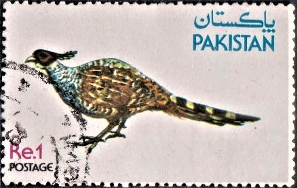 Cheer Pheasant : Wallich's pheasant