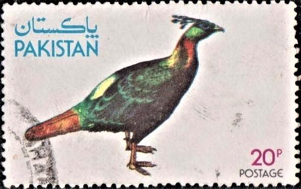Himalayan Monal : Impeyan Pheasant