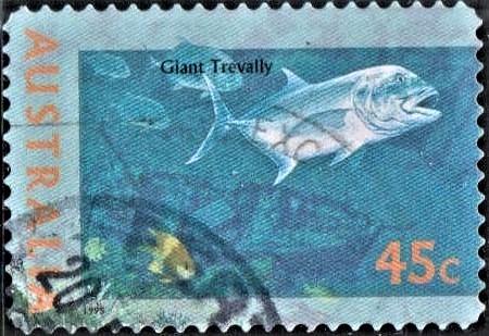 Giant Kingfish Ulua