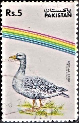 Anser anser (Large Goose)