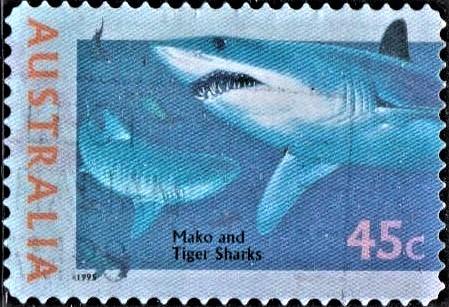 Bonito (Blue pointer) and Tiger Shark