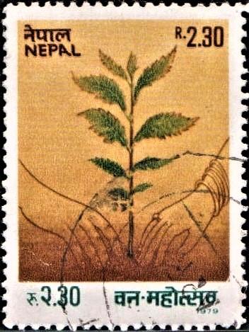 Tree Planting Festival : वन महोत्सव