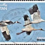 Pakistan on Siberian Crane
