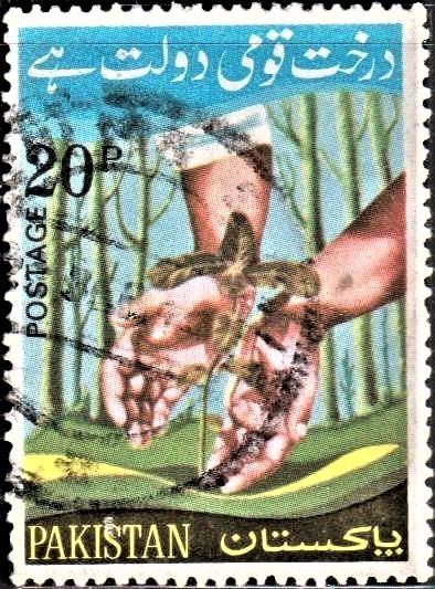 Hands Protecting Sapling