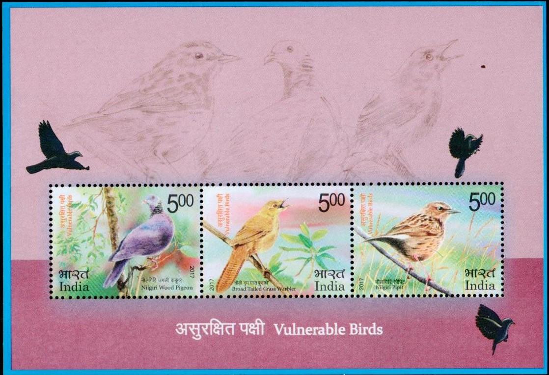 Stamp, Nilgiri wood pigeon, Broad-tailed grassbird, Nilgiri pipit