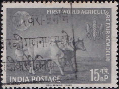 Farmer Ploughing with Bullocks