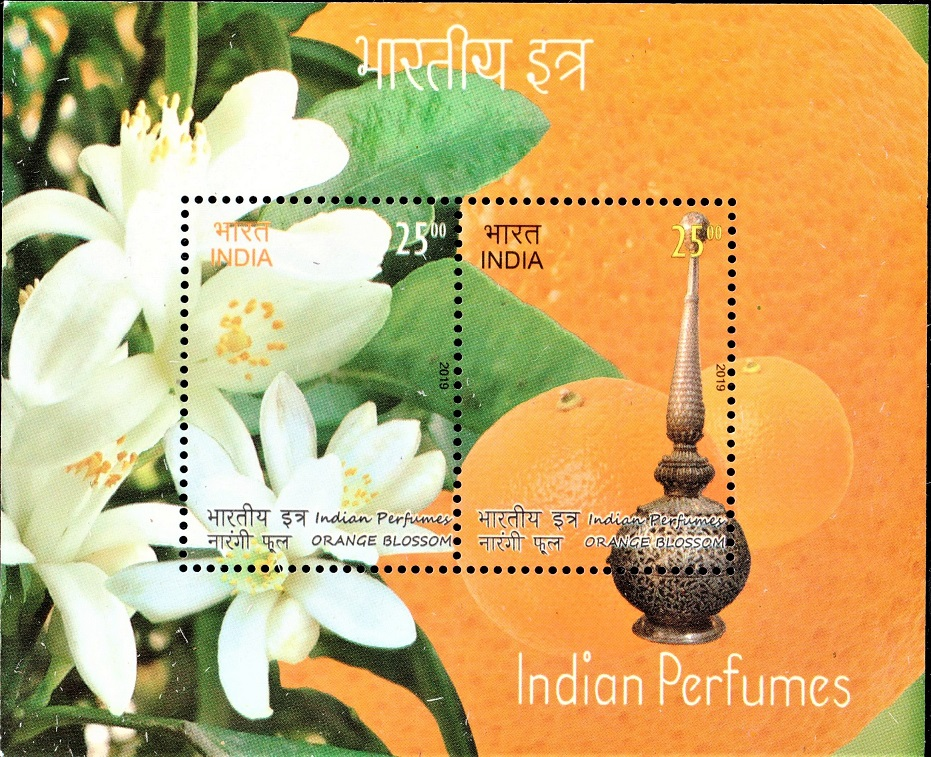 Fragrant Flower of Orange Tree (citrus sinensis)