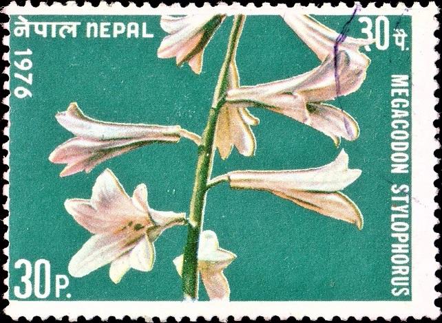 Flower of Nepal